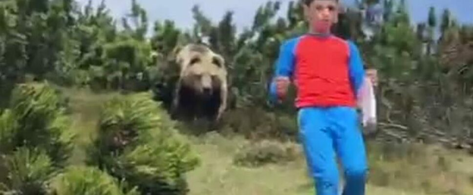 Nail-biting video shows bear following boy during a family hike